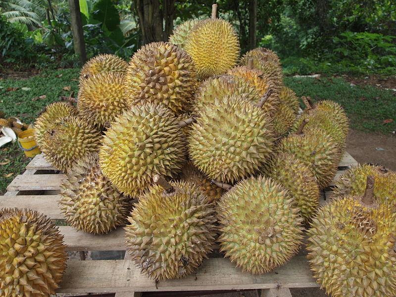 Croyez-en mon expérience, cette pile de durians doit être repérable de loin ! © Kalai