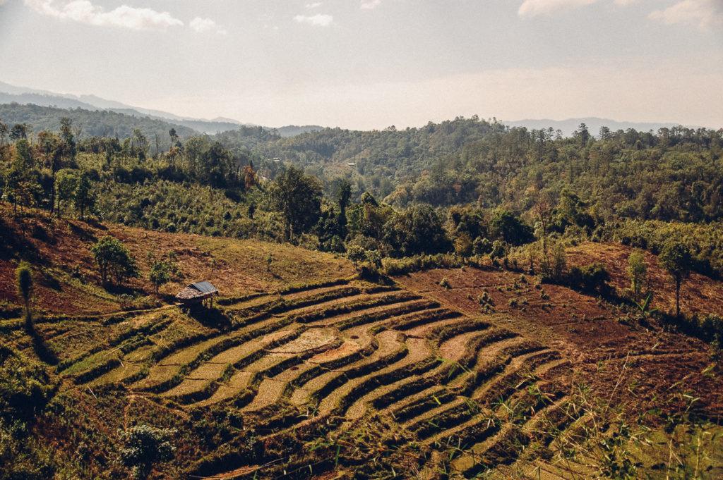Rice fields, North Thailand
