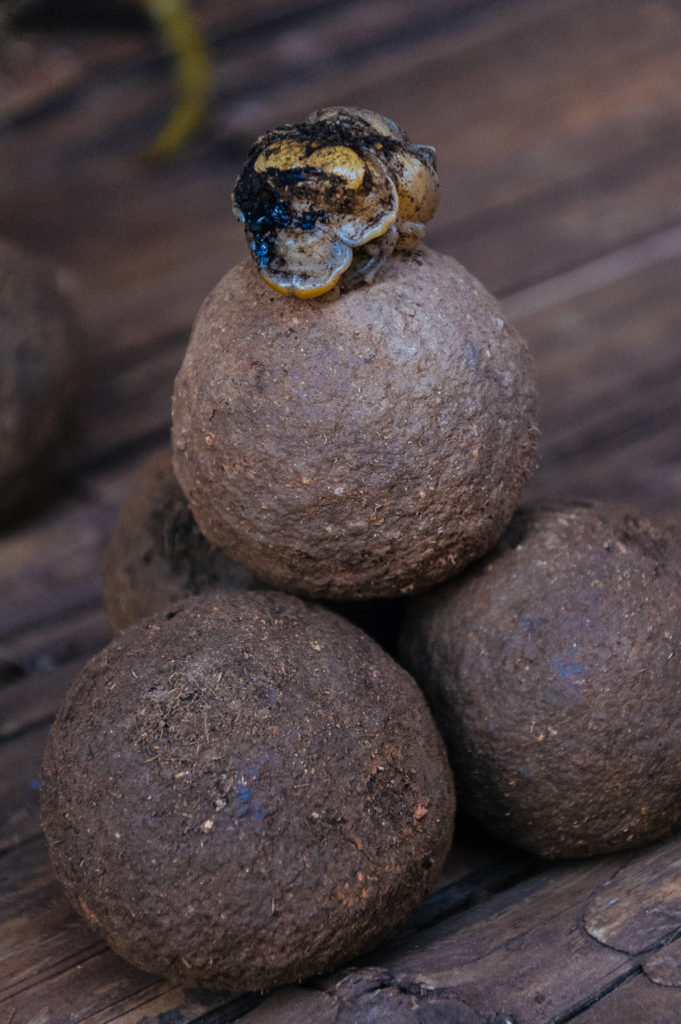Boules de bousier et larve, Thailande
