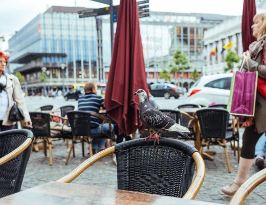Un pigeon à la terrasse d'un café à Liège