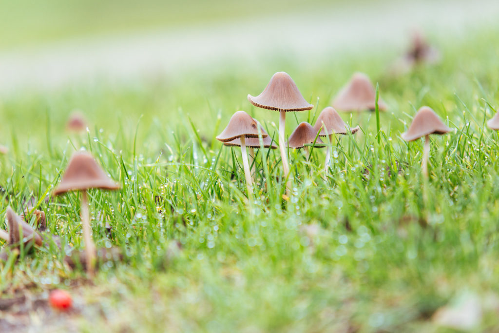 Mushrooms, Wales