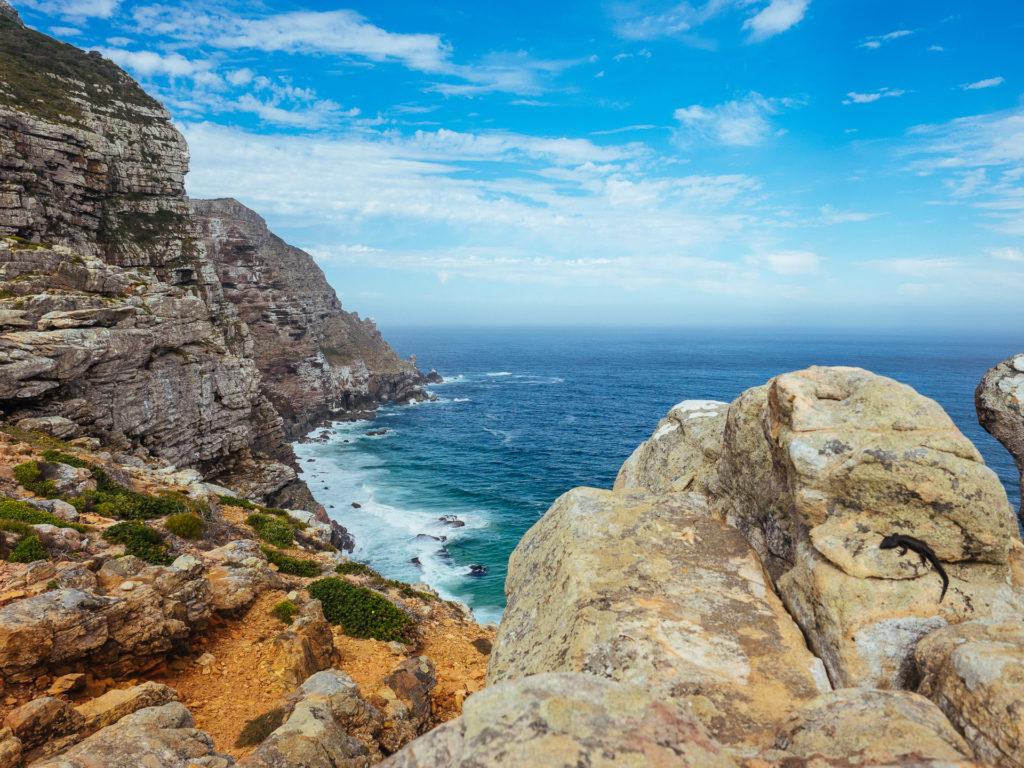 Lezzardo à Cape Point, Afrique du Sud