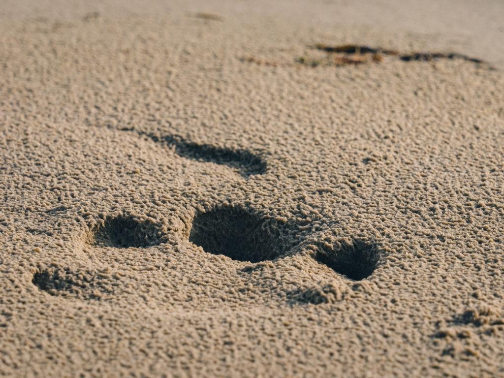 Empreinte d'hippopotame, Rocktail Beach Camp