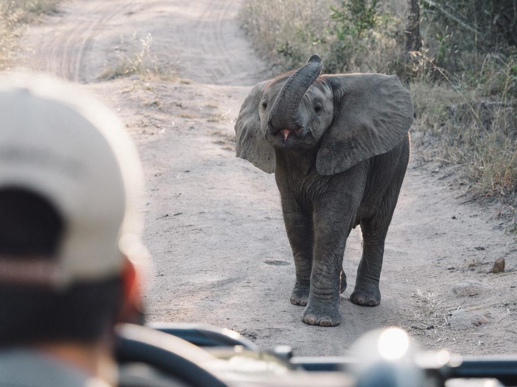 Attaque d'éléphant, Umkumbe Safari Lodge, Afrique du Sud
