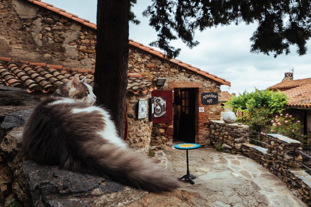 El gatto catalan, Castelnou