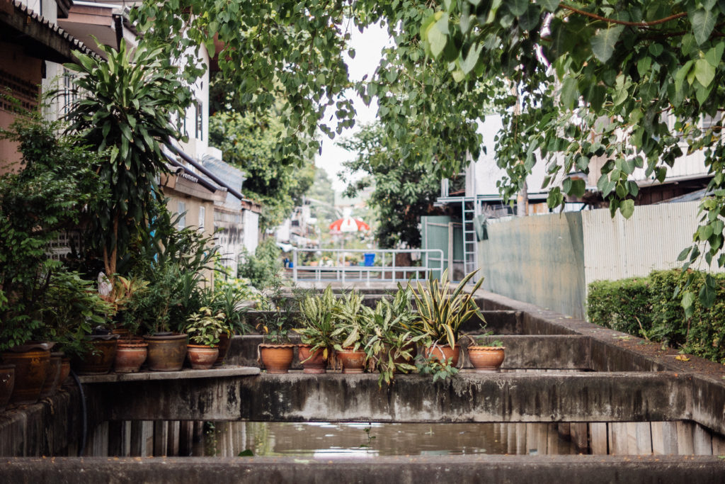 Plants in pots over the Klongs, Bangkok