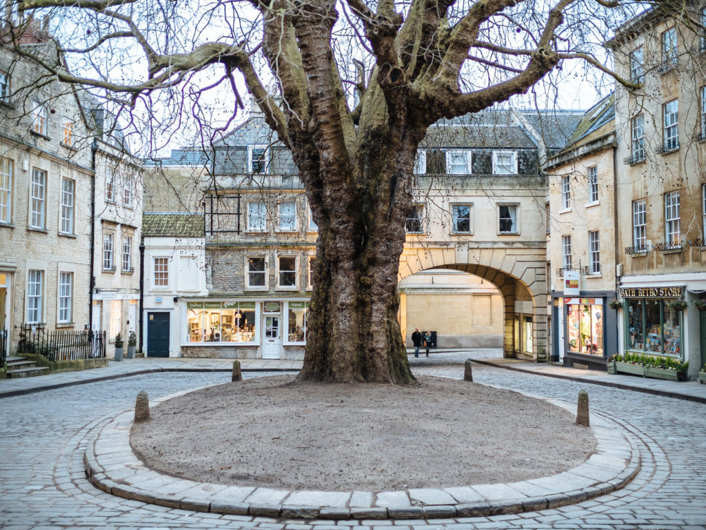 Old tree, Bath