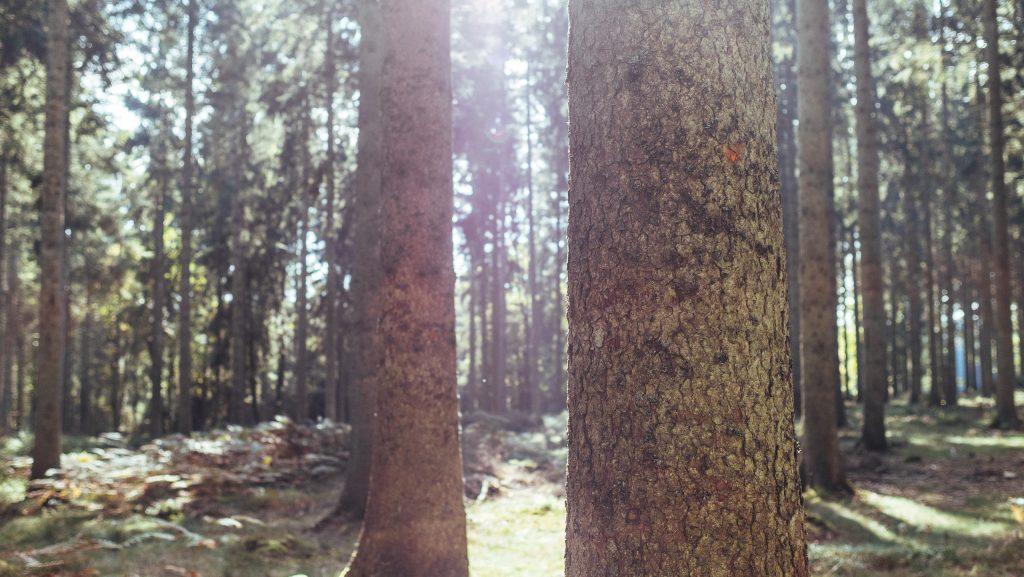 Arbres de la forêt d'Ardenne