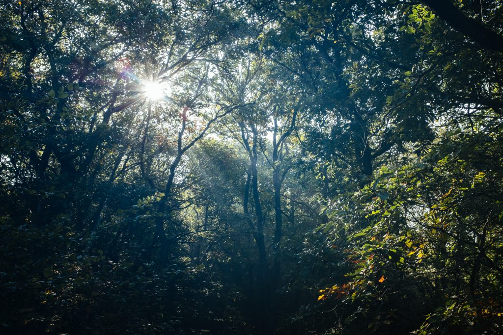 Forêt d'Ardenne et rayons du soleil