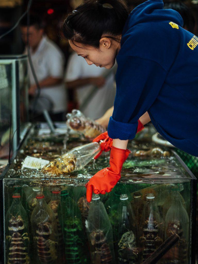 Une dame retourne des bouteilles en plastique qui contiennent des crevettes-mante à l'intérieur d'un aquarium à Sai Kung