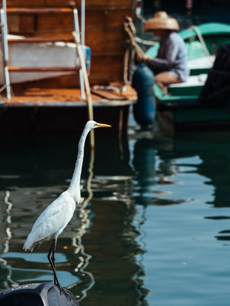 Un héron observe un pêcheur à Sai Kung.