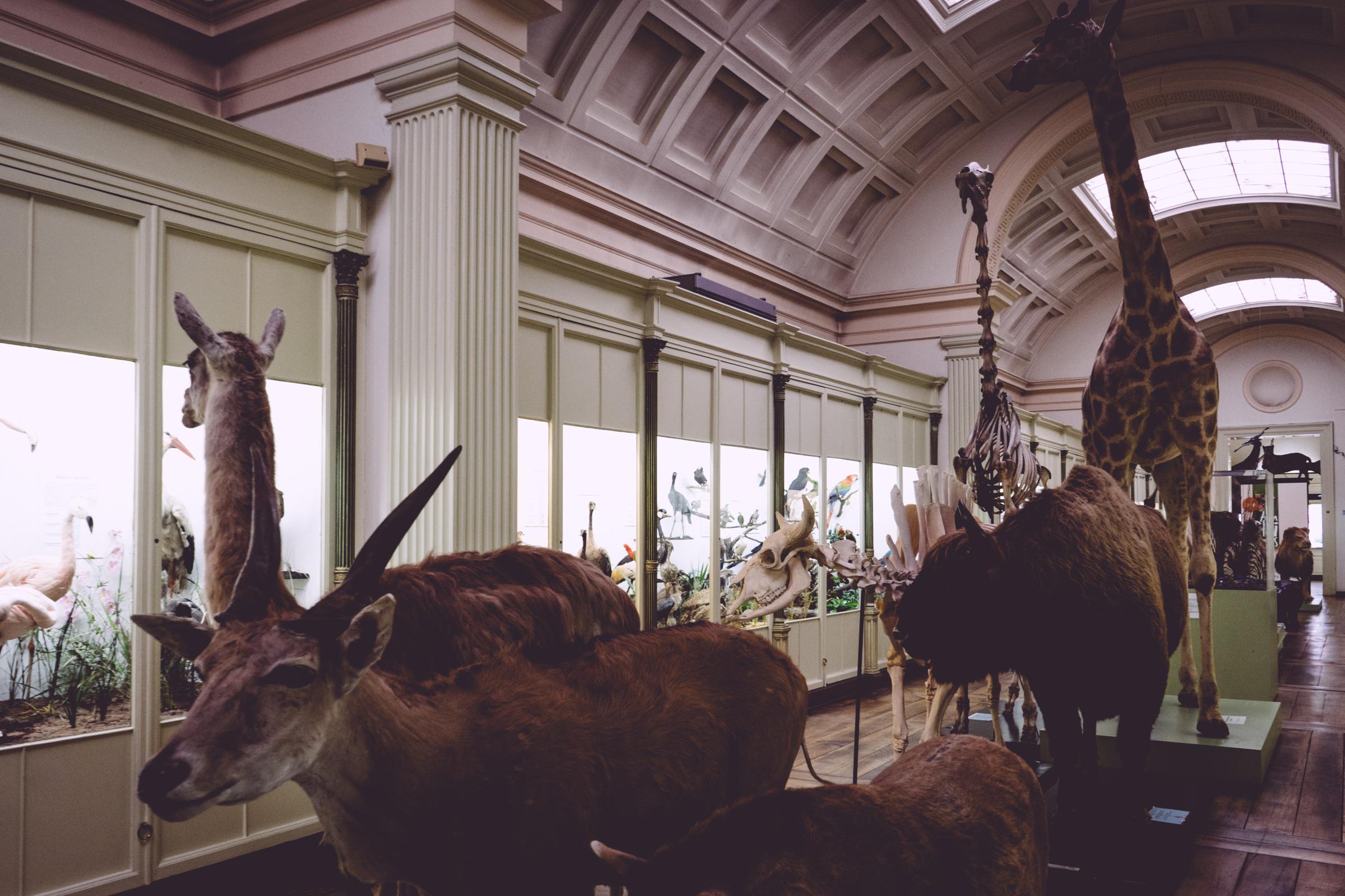 Le couloir du cabinet des curiosités du musée d'histoire naturelle de Tournai