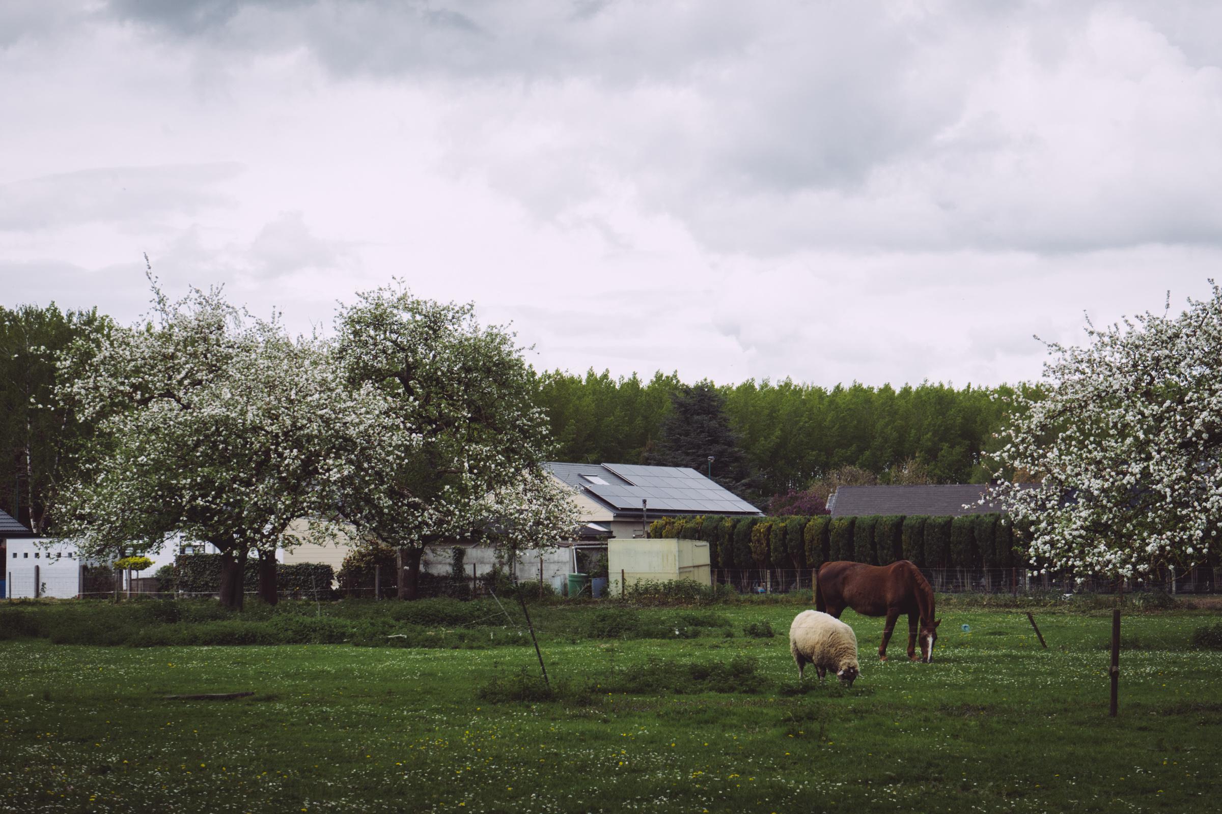 La campagne environnante de Tournai