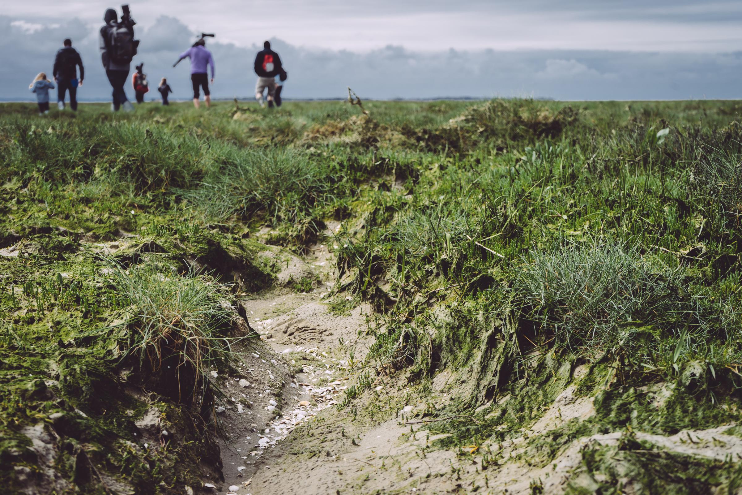 Les prairies maritimes de la Baie de Somme