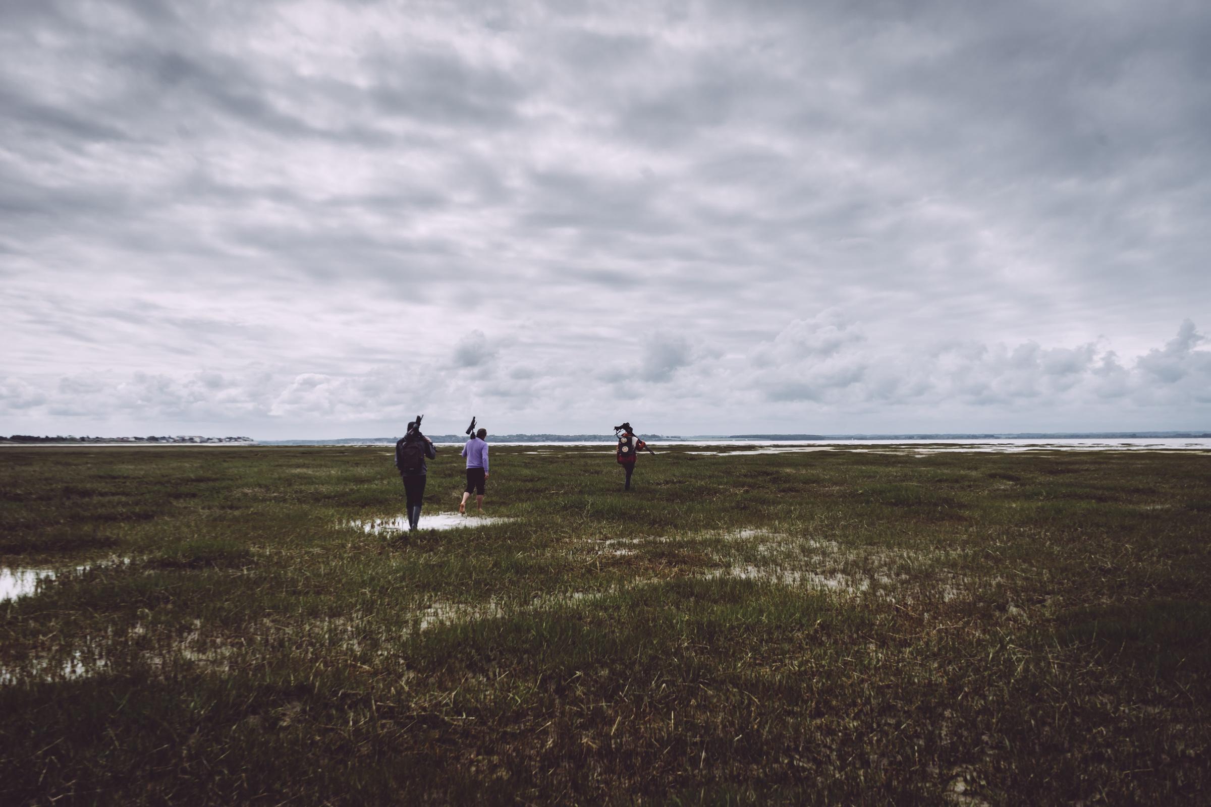 Paysage vert de Baie de Somme