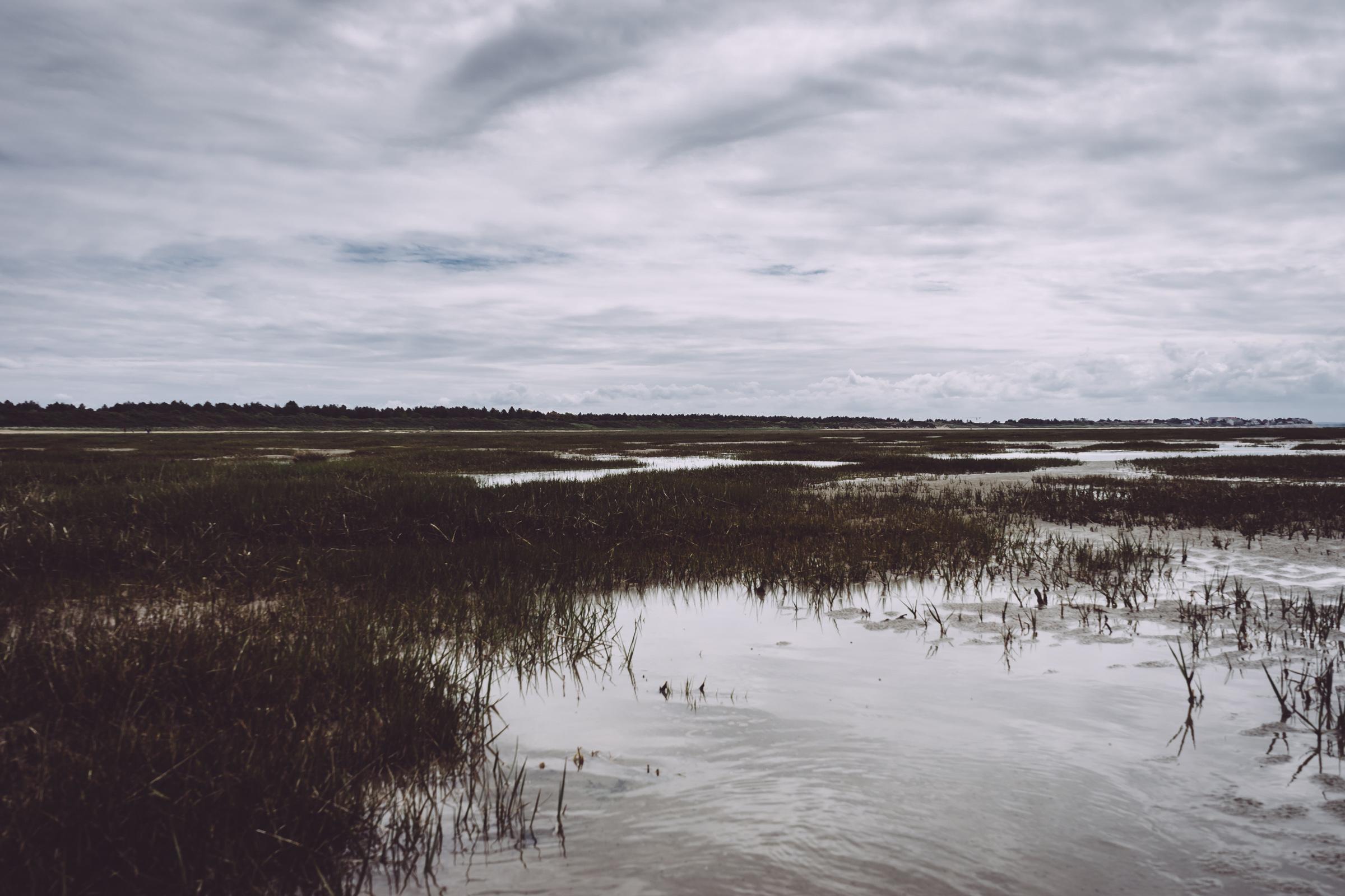 Paysage marécageux de Baie de Somme