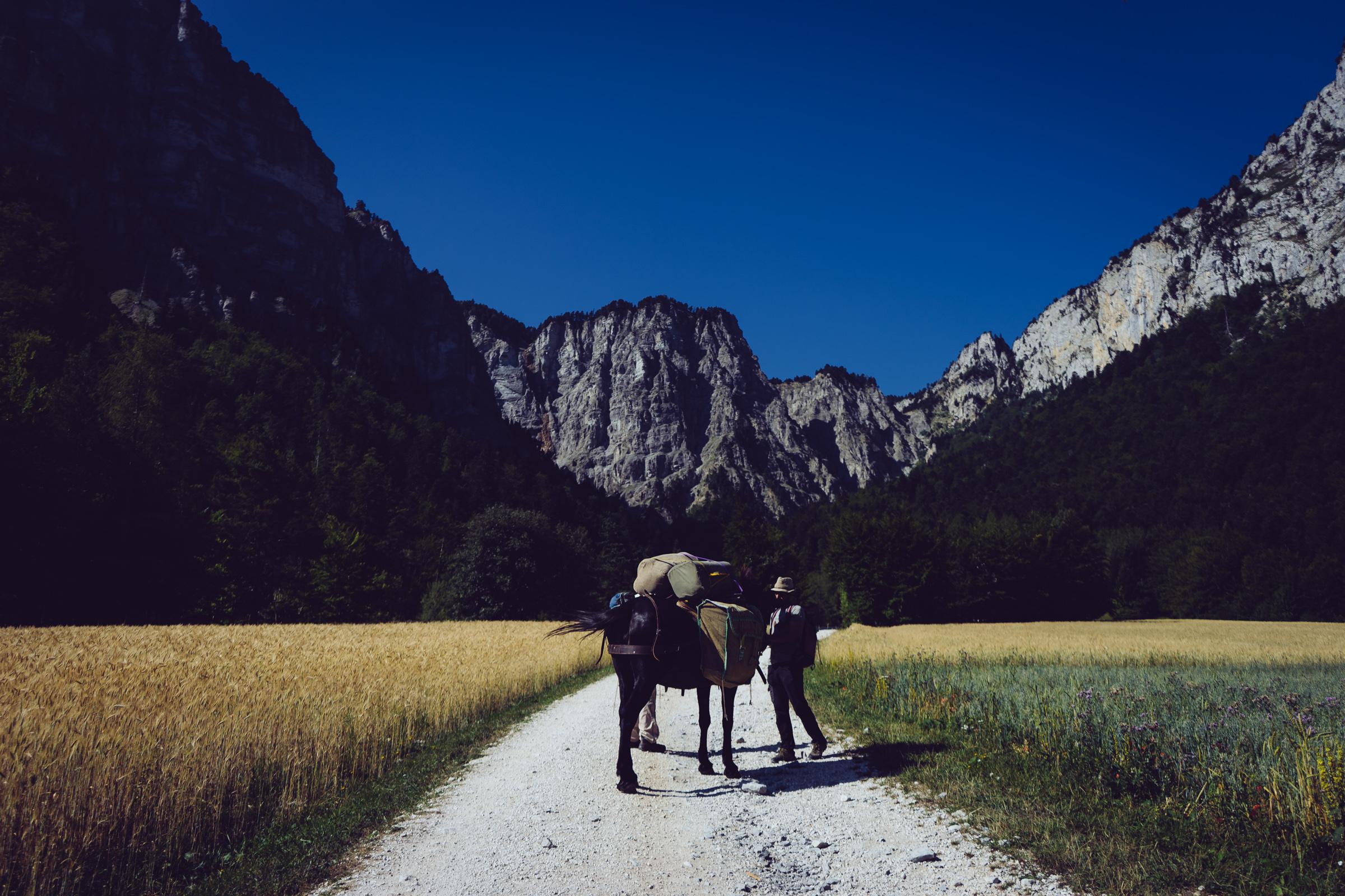 Chichilianne vers le Pas de l'Aiguille - Guide et mule au lieu dit Les Fourchaux