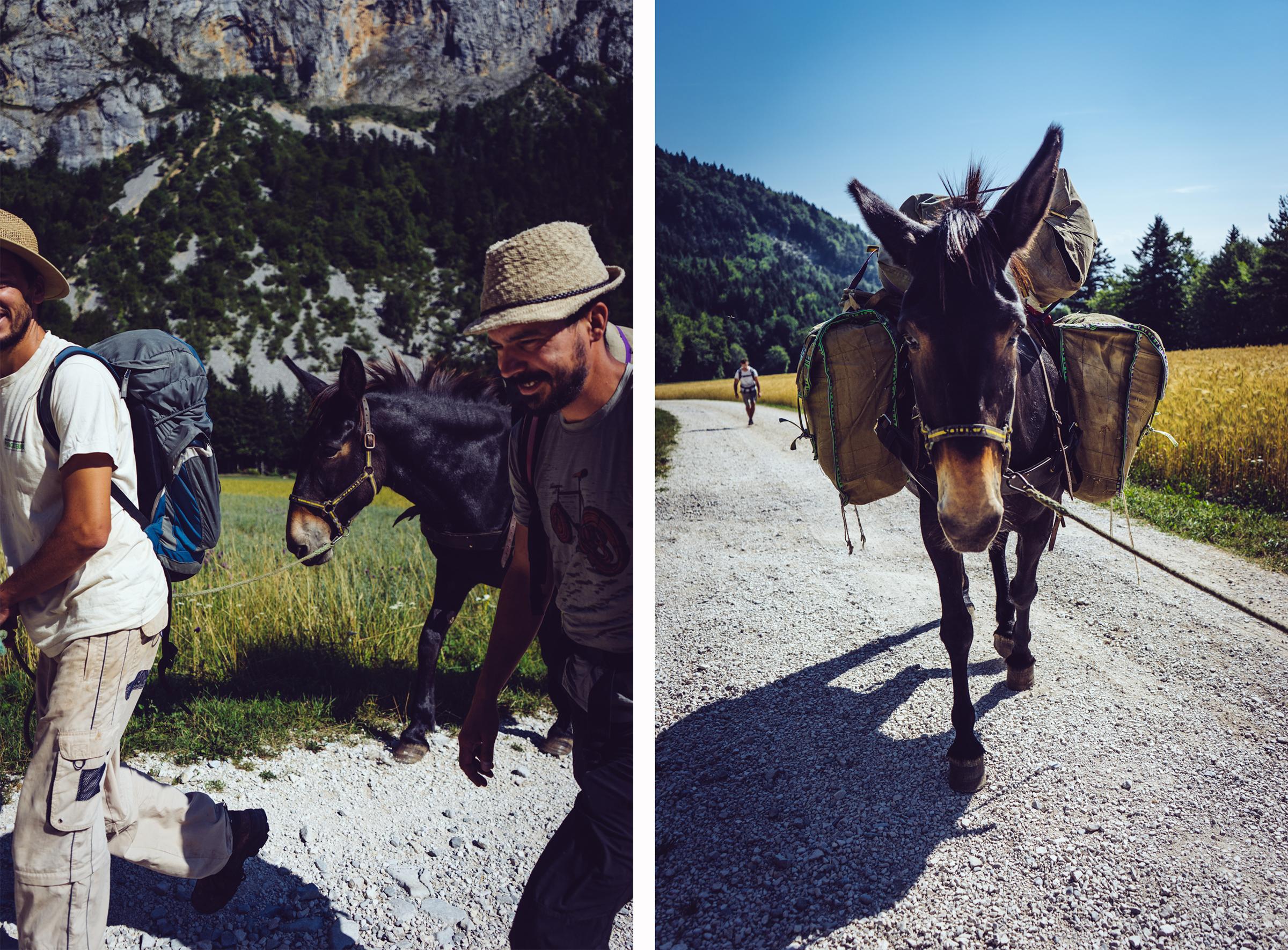 Souka la mule - randonnée dans le Vercors